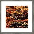 Autumn Solarisation 1 Framed Print