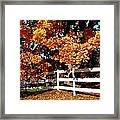 Autumn Splendor 10 Framed Print