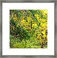 Autumn Splendor 14  Framed Print