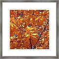 Autumn Splendor 15 Framed Print