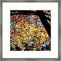 Autumn Splendor 3 Framed Print
