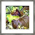 Autumn Splendor 4 Framed Print