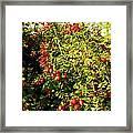 Autumn Splendor 5 Framed Print