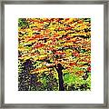 Autumn Splendor Framed Print by Patricia Griffin Brett