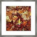 Autumn Splendour Framed Print