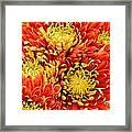 Autumn Sunrise Bouquet Framed Print