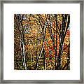 Autumn Trees Framed Print