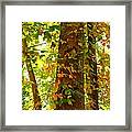 Autumn Vines Framed Print by Candice Trimble