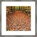 Autumn Walk In Ohio Framed Print