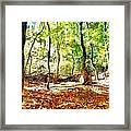 Autumn Warmth Framed Print