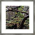 Autumn Wild Nature Denmark Framed Print