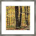 Autumn Woods 1 Framed Print