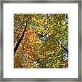 Autumn Woods Sky View Framed Print