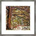 Autumnal Colors In The Summer Time. De Haar Castle Park Framed Print