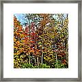 Autumnal Foliage Framed Print
