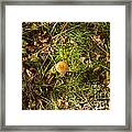 Autumnal Transformation Framed Print