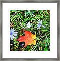Autumns First Leaf Framed Print