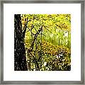 Autumn's First Reflections II Framed Print