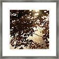Autumns Golden Morning Framed Print