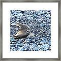 Away From My Nest Framed Print