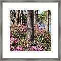 Azalea At The Lake Framed Print
