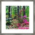 Azaleas Red Maple And Magnolia Trees Framed Print