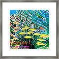 Bahamas Coral Reef Framed Print