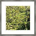 Bali Sayan Rice Terraces Framed Print