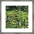 Balinese Dream Framed Print