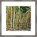 Bamboo Fencing Framed Print by Lilliana Mendez