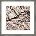 Bare Tree Adobe Wall Framed Print by Joe Kozlowski