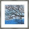 Bare Tree Against Blue Sky Framed Print