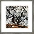 Bare Tree On The Hill Framed Print