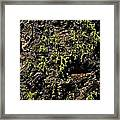 Bark Framed Print by Rebecca Christine Cardenas
