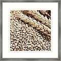 Barley Grains And Stalks Framed Print