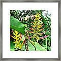 Barnilies Flower Framed Print