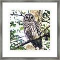 Barred Owl Staring Framed Print