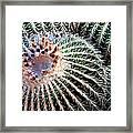 Barrel Cacti Framed Print