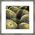 Barrel Cacti Framed Print
