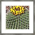 Barrel Cactus With Yellow Fruit Framed Print