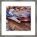 Battle Of The Reptiles Framed Print by Catherine Natalia  Roche