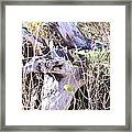 Bayberry And Driftwood Framed Print
