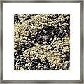 Beach Barnacles Framed Print