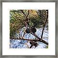 Beach Pine Framed Print