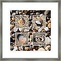 Beach Shells And Rocks Collage Framed Print by Carol Groenen