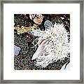 Beach Wares - Shells - Feather Framed Print