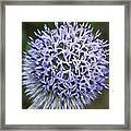 Bearded Flower Framed Print