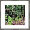 Beartown Rocks State Park Framed Print