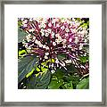 Beautiful Bloom Framed Print