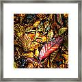 Beautiful Fall Color Framed Print